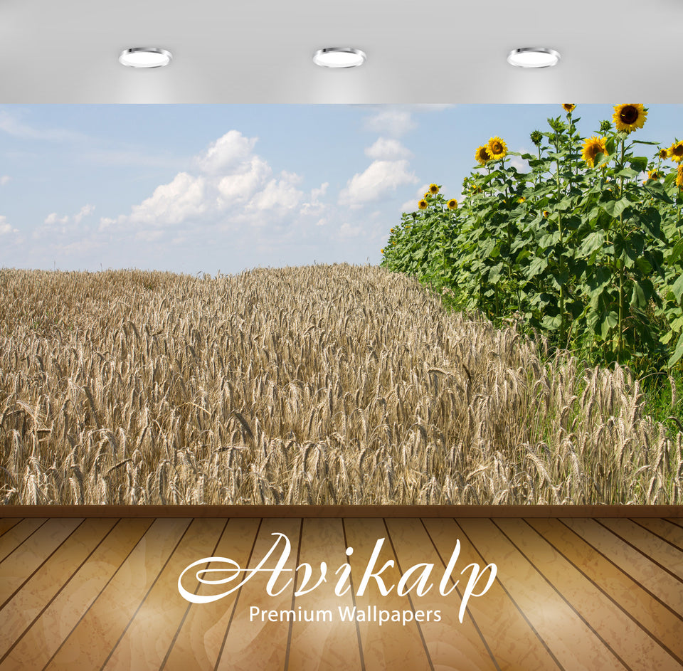 Avikalp Exclusive Awi6428 Sunflowers And Wheat Nature Full HD Wallpapers for Living room, Hall, Kids