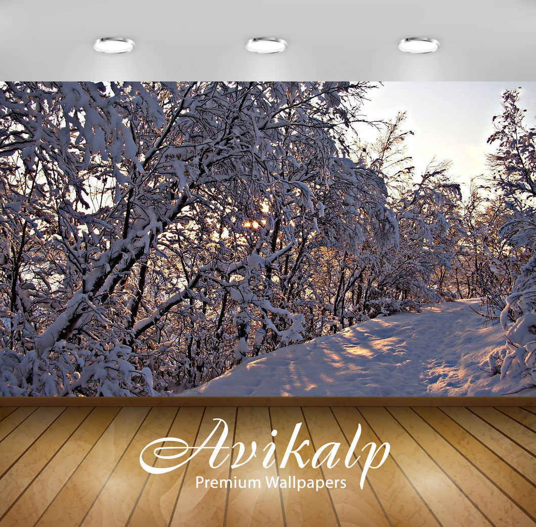 Avikalp Exclusive Awi6496 Sunset Light Barely Reaching Through The Thick Snow Nature Full HD Wallpap