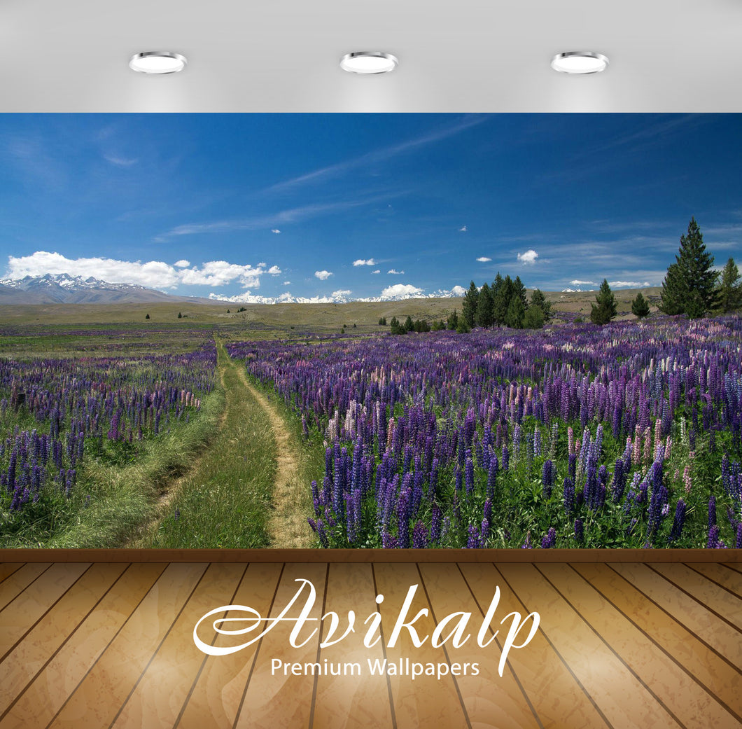 Avikalp Exclusive Awi6587 Trail Through The Lupine Field Nature Full HD Wallpapers for Living room,