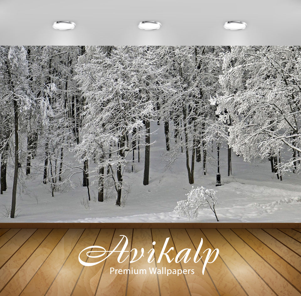 Avikalp Exclusive Awi6718 Winter Park Nature Full HD Wallpapers for Living room, Hall, Kids Room, Ki