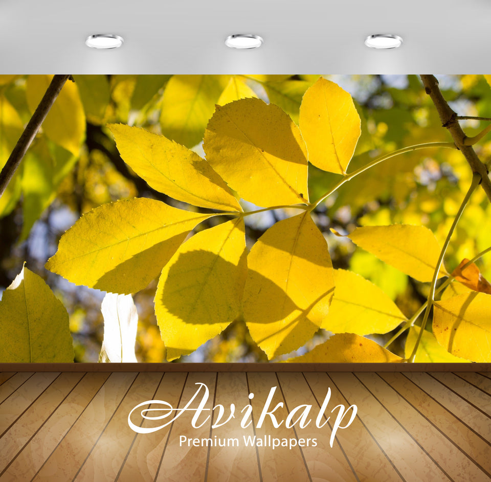 Avikalp Exclusive Awi6742 Yellow Branch In The Sunlight Nature Full HD Wallpapers for Living room, H