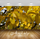 Avikalp Exclusive Awi6750 Yellow Leaves In The Soft Sunlight Nature Full HD Wallpapers for Living ro