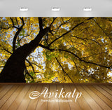 Avikalp Exclusive Awi6754 Yellow Maple Branches Nature Full HD Wallpapers for Living room, Hall, Kid