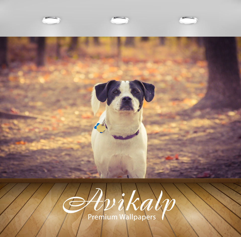 Avikalp Exclusive Premium dog HD Wallpapers for Living room, Hall, Kids Room, Kitchen, TV Background