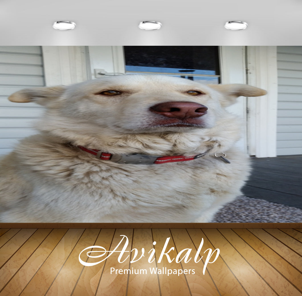 Avikalp Exclusive Premium dogs HD Wallpapers for Living room, Hall, Kids Room, Kitchen, TV Backgroun