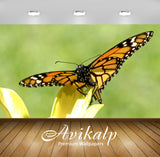 Avikalp Exclusive AWI976 Nature HD Wallpapers for Living room, Hall, Kids Room, Kitchen, TV Backgrou