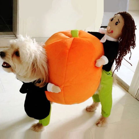 Pet Fancy Costume