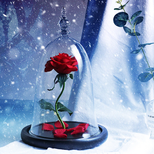 Immortal Enchanted Bell Rose LED Glass Display (Preserved or Artificial)