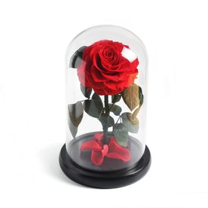 Immortal Enchanted Preserved Rose Glass Display (5 Colors)