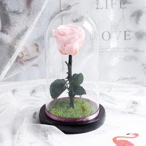 Immortal Enchanted Preserved Rose Glass Display w/Grass (4 Colors)