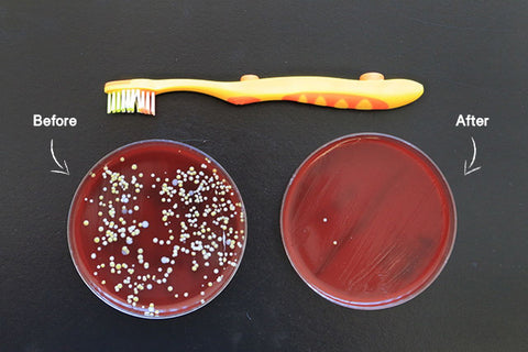 Before and after petri dishes of a toothbrush
