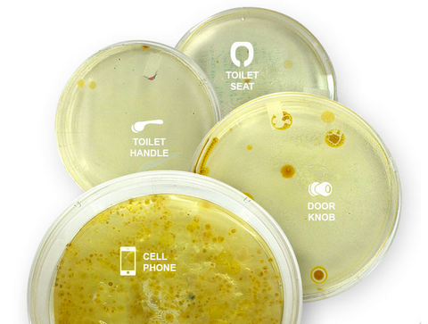 Petri dishes showing germs found on various items