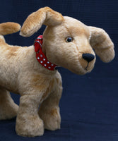 Goldie is a friendly and very well behaved, artist teddy dog made in beautiful golden old English mohair by Barbara Ann Bears Goldie stands 10 inches( 25 cm) tall, she is 12 inches (31 cm) from nose to the base of her tail and she is 11 inches (28 cm) across the ears.