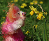 Little Schubert is an adorably colourful and sweet, one of a kind artist bear in scrumptious hand-dyed mohair by Barbara-Ann Bears. Little Schubert stands just 6.5 inches (16 cm) tall and is 5 inches (12 cm) sitting.