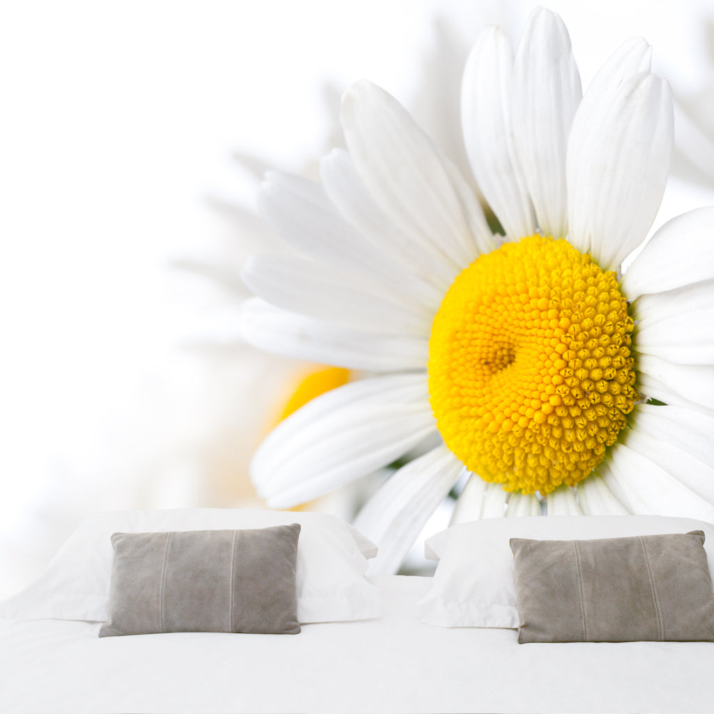 Outstanding Daisy Wall Decor Composition - All About Wallart ...