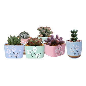 Cute Ceramic Decorative Flower Pots-home accent-wanahavit-Square Green-wanahavit