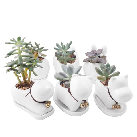 Cute Novel Animal Flower Pot