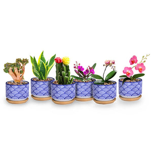 Small Glazed Ceramic Decorative Flower Pots-home accent-wanahavit-3pcs-wanahavit