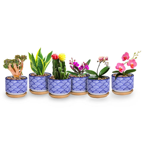 Small Glazed Ceramic Decorative Flower Pots