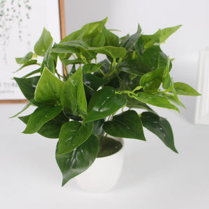 Chicken Heart Green Leaves-home accent-wanahavit-wanahavit