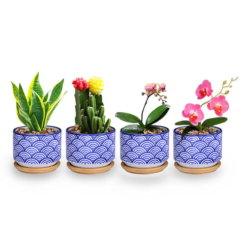 Small Glazed Ceramic Decorative Flower Pots For Home Accent Wanahavit