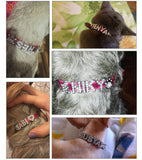 Pet Necklace - Jewelry