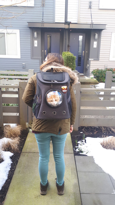 Oxford: Your Cat Backpack Featured Feline
