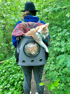 Binx and Norman: Your Cat Backpack Featured Feline