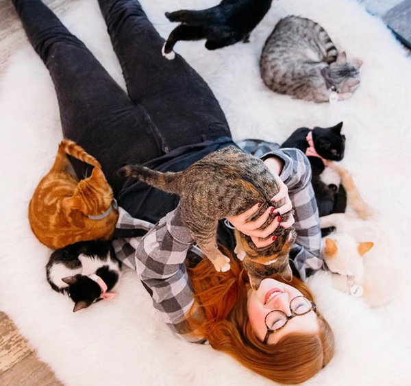 45+ Cat Cafes in the United States and Canada that We Know of that You Need to Check Out