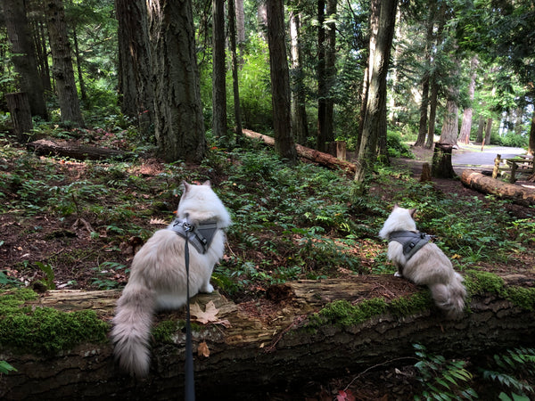Tips from Cat Parents Who Have Taken These Adorable Kitty Siblings to 15+ National Parks