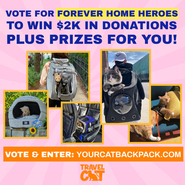 Nominate or Vote for a Forever Home Hero to Win $2k in Donations Plus Prizes for You!