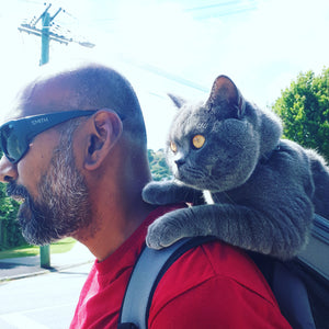 New Zealand's Rafferty, a British Shorthair with Catitude: Your Cat Backpack Bubble Carrier Bio