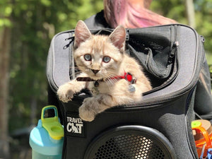 33  Adorable Kitties in Cat Backpacks Show Us How Adventuring is Really Done