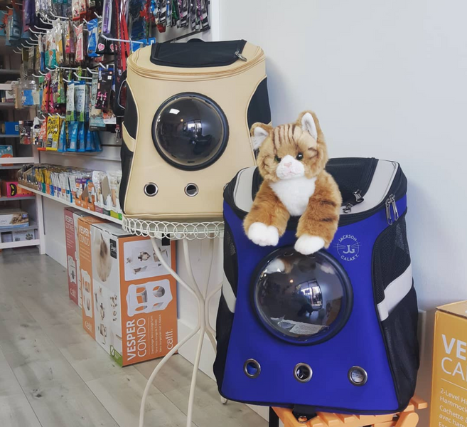 The Best Cat-Focused Stores for Your Feline Friends' Needs