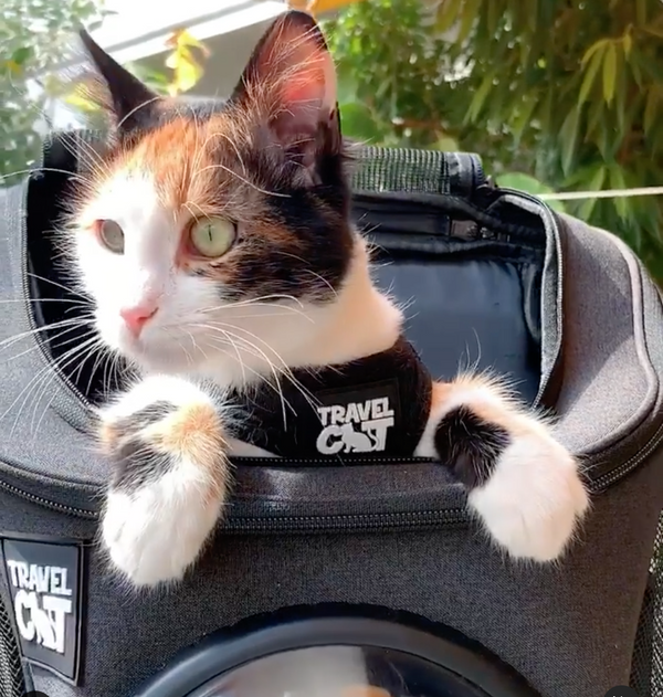 Adorable Cat Backpack Training Tips