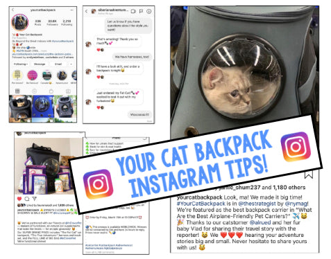 6 Important Instagram Tips for Pet Stores that Will Drive Business and Foot-Traffic