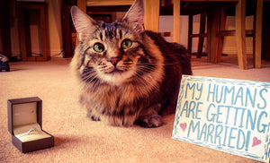 11 Purr-fect Ways To Incorporate Your Cat Into Your Wedding