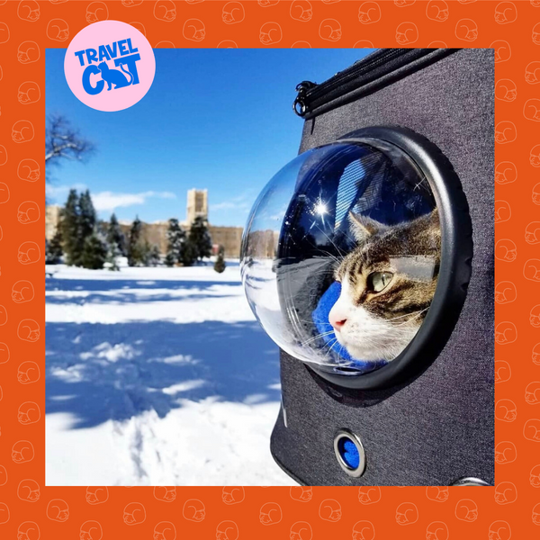 Catstomer Feature: Colorado Travel Cats Living Their Best Lives