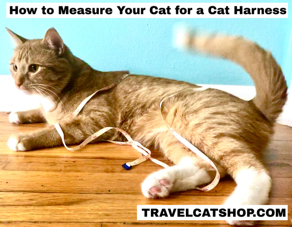 How to Measure Your Cat for a Cat Harness -- The Right Way