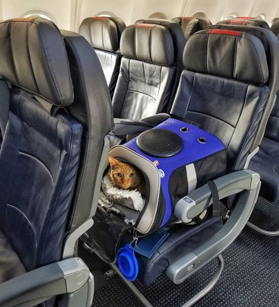 Cat Backpacks that are Carry-On Airline and Fly Compliant for Adventure Cats