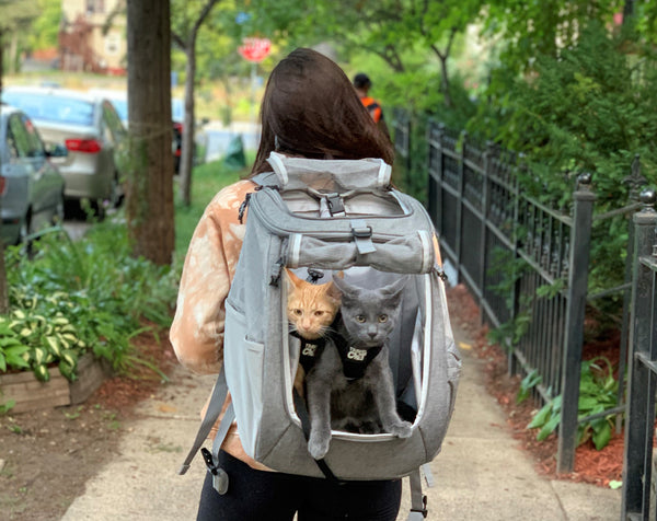 Cat Backpack that Fits 2 Cats (or lots of kittens): The Fat Cat by Your Cat Backpack