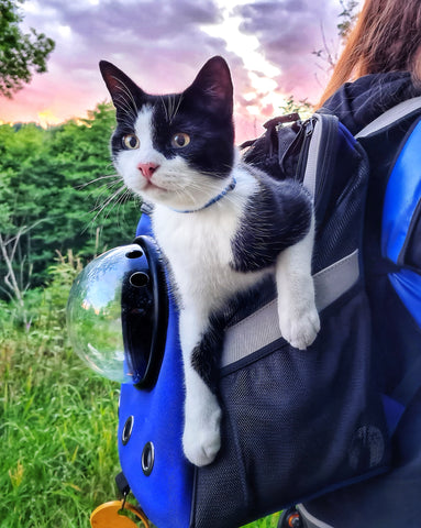 The Jackson Galaxy Backpack