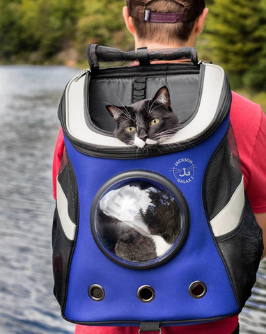 Ruger in cat backpack on lake