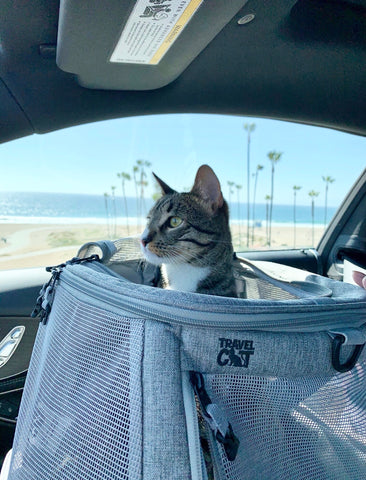 The Navigator Convertible Cat Backpack Carrier