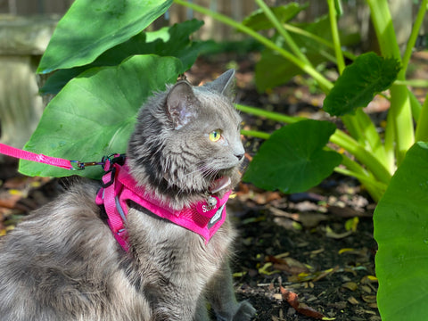 The Purrfectly Pink Cat Harness