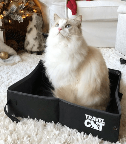"""The Feline Fancy"" Travel Cat Accessories Bundle"