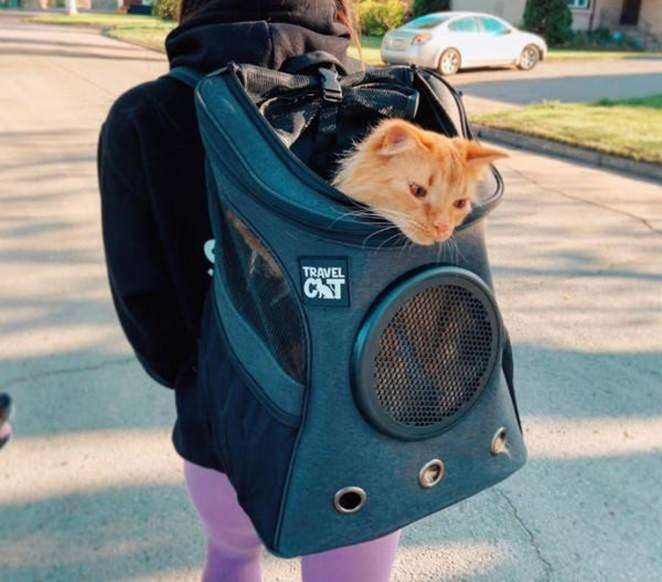 """The Whole Kitten Kaboodle"" Bundle: Fat Cat Backpack, Harness, Leash, Retractable Leash, Bed & Cave, Travel Bowl, Foldable All-In-One Double Bowl & Mat"