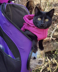 """The Explorer"" Cat Backpack"