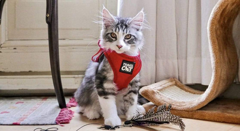 """Your Kitten Me"" Harness Bundle"