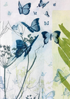 butterflies-greeting-card-rectangle